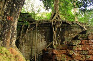 AngkorWatTapinaklari78