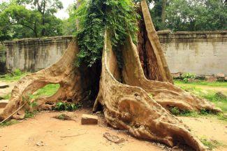 AngkorWatTapinaklari82