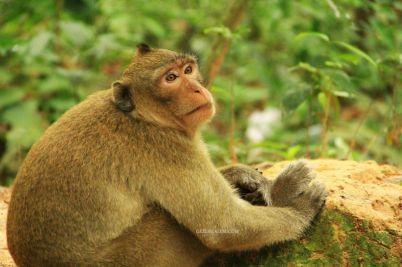 AngkorWatTapinaklari89