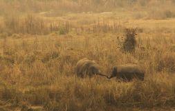 ChitwanFillerveKano15