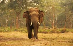 ChitwanFillerveKano60