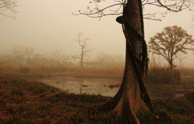 ChitwanJeepSafari10