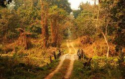 ChitwanJeepSafari14
