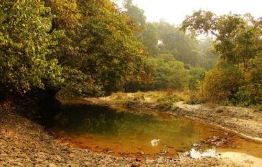 ChitwanJeepSafari21