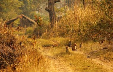 ChitwanJeepSafari32