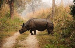 ChitwanJeepSafari51