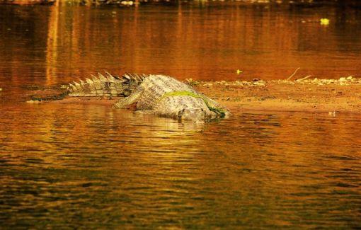 ChitwanOrmanYuruyusu12