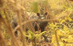 ChitwanOrmanYuruyusu24