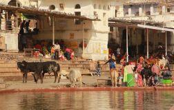 Pushkar13