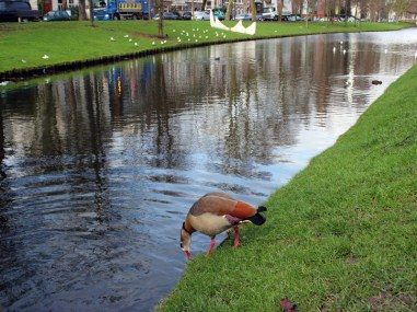 RotterdamDelft11