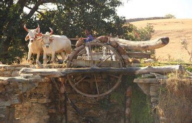 Udaipur41