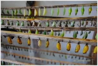 İstanbul Kelebek Çiftliği-12