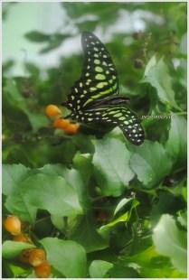 İstanbul Kelebek Çiftliği-3