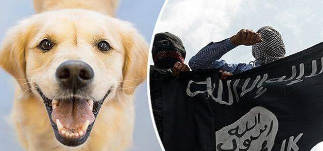 ISIS terrorists are using dogs strapped with explosives to attack the Iraqi Forces