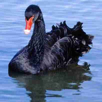 "HONOR ROLL 2010 | ""Black Swan"" Director Darren Aronofsky and His Cast"