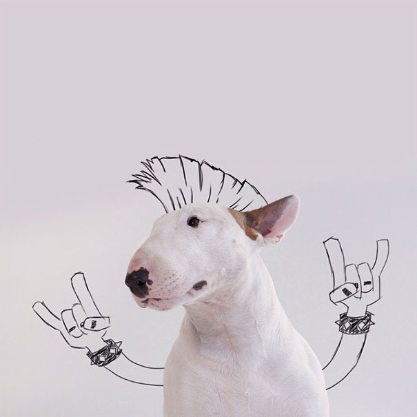 Jimmy-the-Bull-Terrier2__605