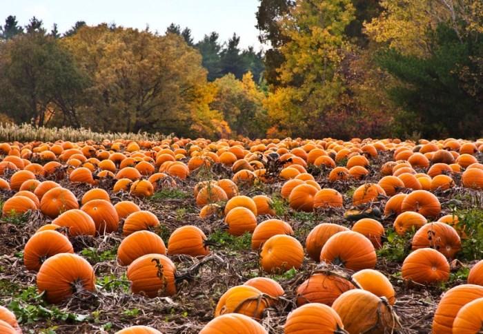 Je eigen Halloween pompoen kweken