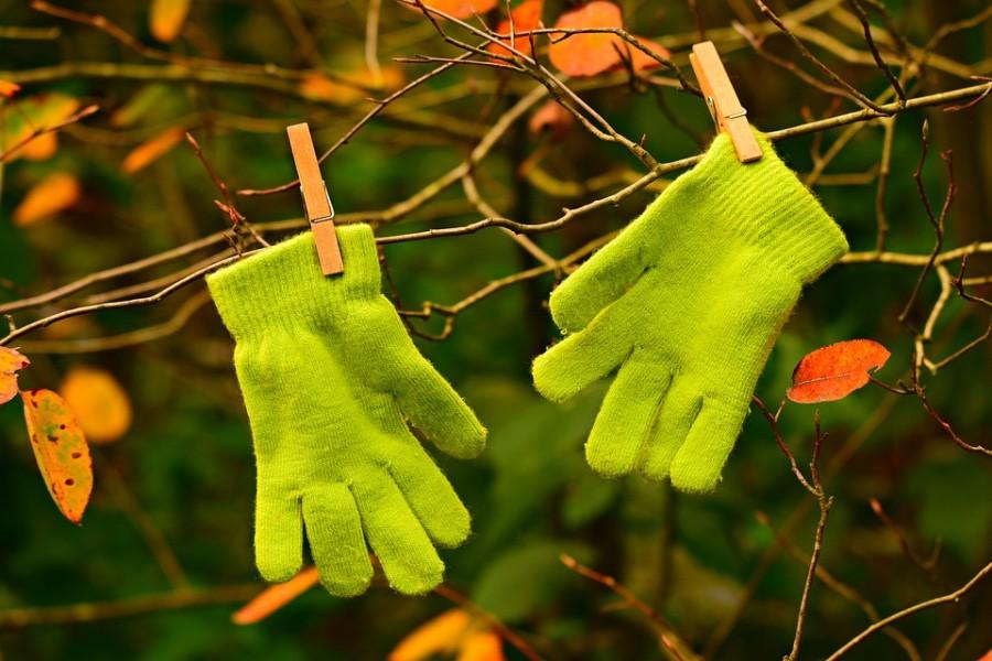 Handschoenen in boom