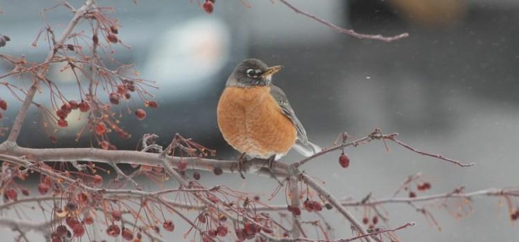 Help de diertjes de winter door