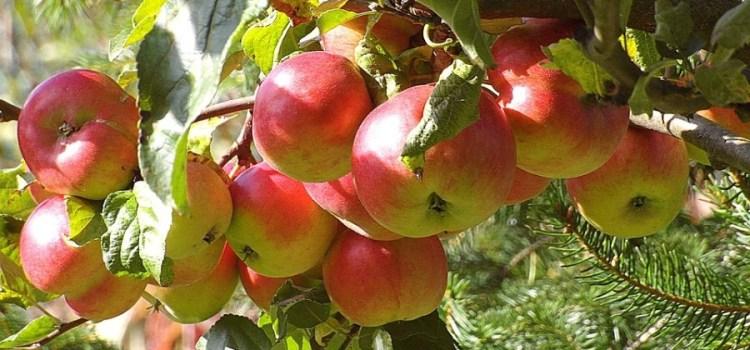 Wat is het voordeel van biologisch eten?