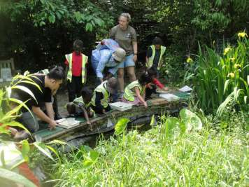 pond dipping 018