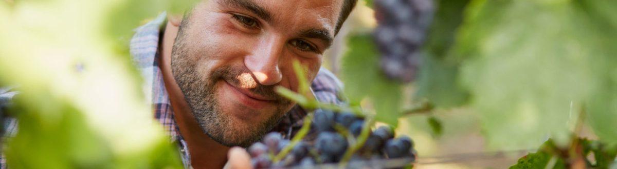 Wine Festivities Start This Week!