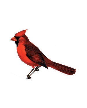 """Cardinal Magnet or Sticker for Indoor or Outdoor Use 7"""" x 5"""""""