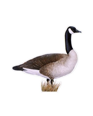 """Goose Magnet or Sticker for Indoor or Outdoor Use 7"""" x 6.5"""""""