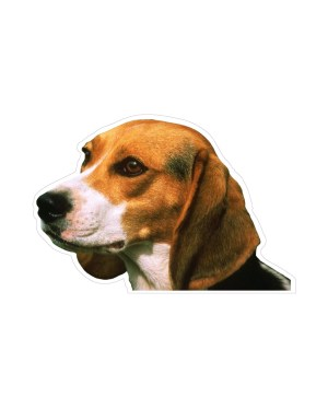 """Beagle Magnet or Sticker for Indoor or Outdoor Use 6"""" x 4"""""""