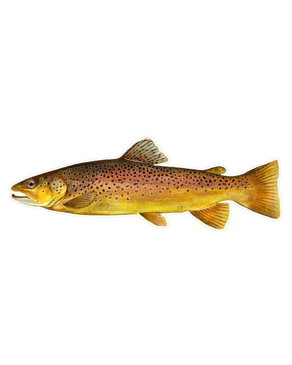 "Brown Trout Fish Magnet or Sticker for Indoor or Outdoor Use 9"" x 3"""