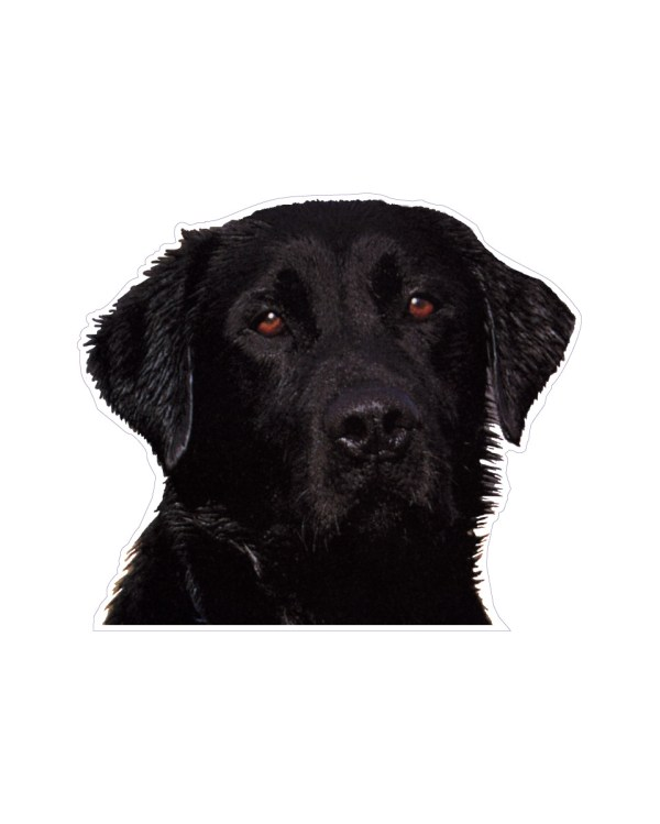 """Black Lab Magnet or Sticker for Indoor or Outdoor Use 5"""" x 5"""""""