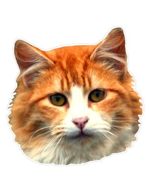 """Cat Magnet or Sticker for Indoor or Outdoor Use 6"""" x 6"""""""