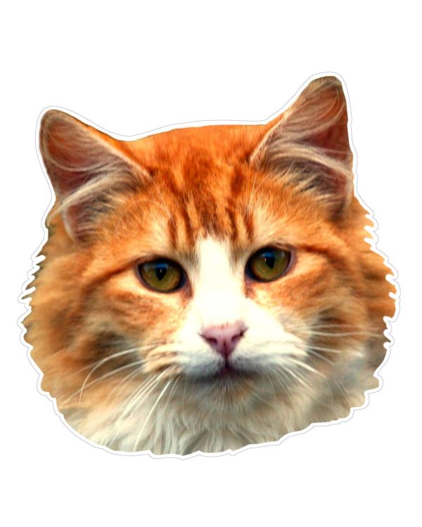 "Cat Magnet or Sticker for Indoor or Outdoor Use 6"" x 6"""