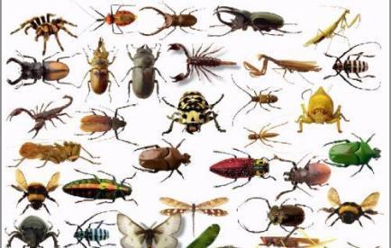 شركة مكافحة حشرات بالظهان