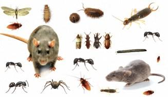 شركة مكافحة حشرات بالقويعية
