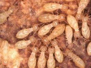 شركة مكافحة حشرات بالمزاحمية