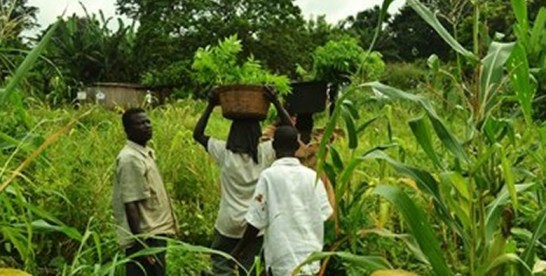 SIF to invest $3.1m to boost agribusiness in Ghana