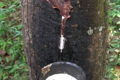 Ghana rubber outgrower plantation project gets €17.7m financing