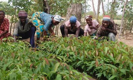 Ghana drifts to use of technology to boost agriculture sector