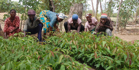 How realistic is agricultural modernisation in Ghana?