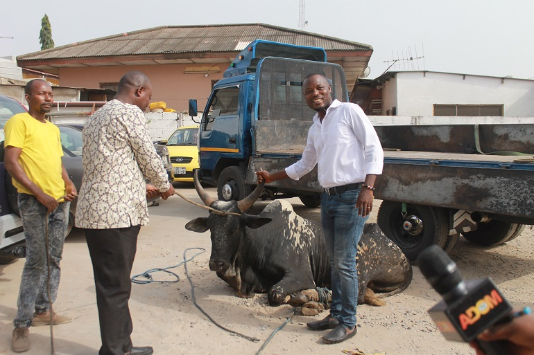 Mr Quansah (right) resenting the cow to Mr Fugar of Multimedia