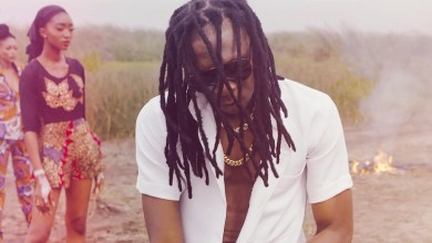Photo of Video: Chihuahua by Mugeez