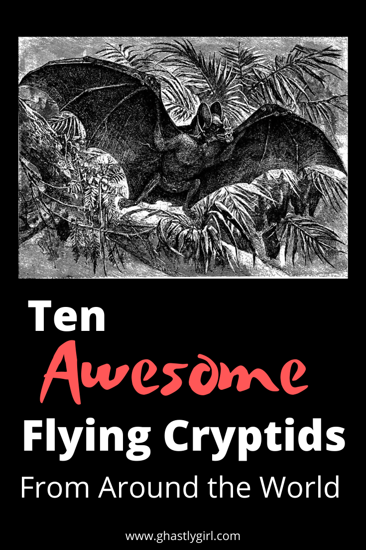 Ten awesome flying cryptids from around the world #paranormal #cryptid #cryptozoology #flyinghumanoid