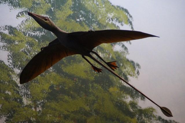 an illustration of a pterosaur in flight