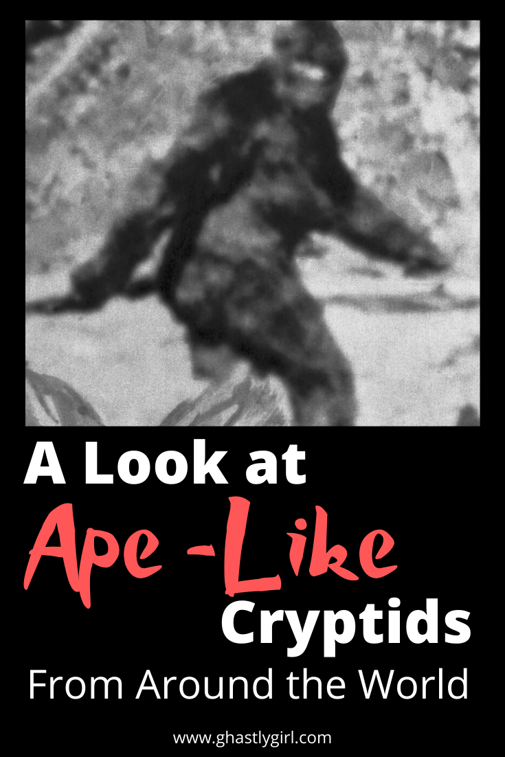 From Bigfoot to the Yeti there are ape-like cryptids on nearly every continent. We look at the possible explanations, regional differences and more. #cryptids #bigfoot #apelikecryptid #paranormal
