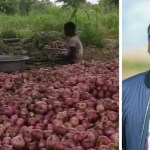 Creating Multiple Streams Of Income: Samini's Onion Farm Business Booming For Him ( Pictures & Video)