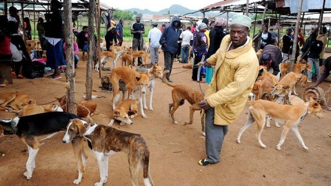 Thousands of people sign a petition to stop Nigerians from eating dog meat