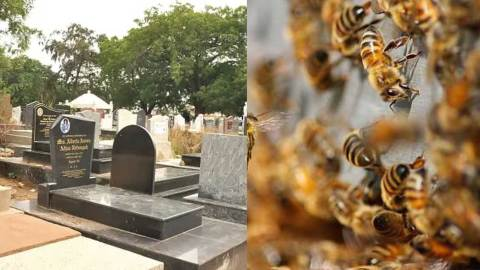 Pastor and church members run for their lives at a cemetery after bees invaded the grave of an 18 year old they've gone to bury