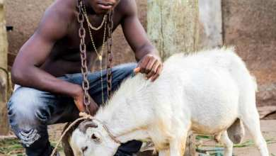 Photo of Ay Poyoo – Goat(Official Video)
