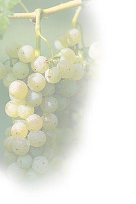az agricola Fausto Ghenda vini della laguna marano